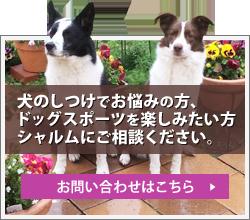 犬のしつけ、ドッグスポーツのことお問い合わせください。